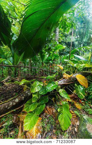 tropical forest in Valle de Mai, Praslin, Seychelles
