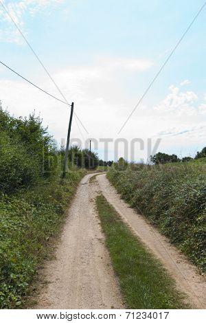 Unpaved road amidst plants