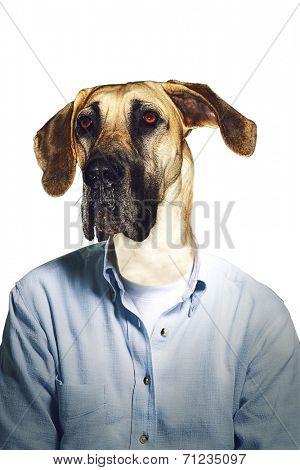 Grumpy dog's head on businessman body