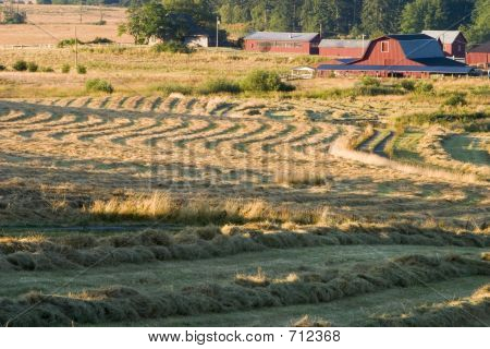 Farm And Hay Field