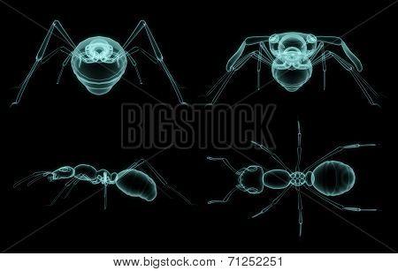 X-ray Ant Body