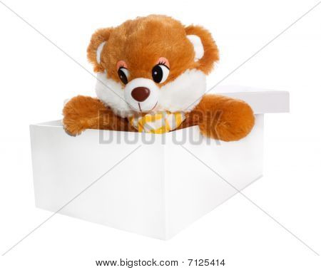 Teddy Bear Inside a Box