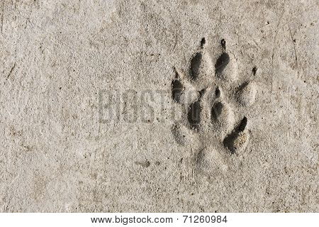 Footprints In Concrete