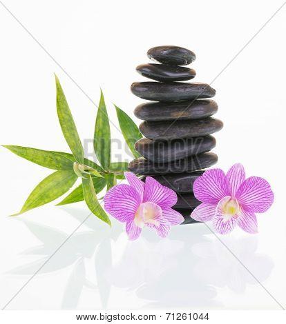 Purple Dendrobium Orchids With Black Stones