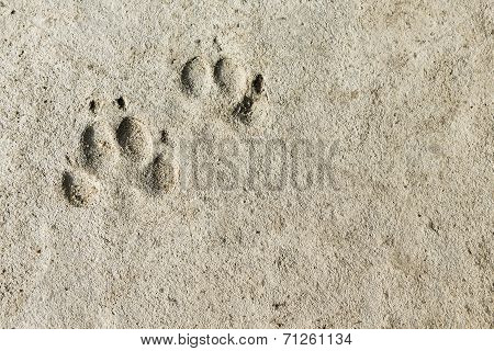 Permanent Footprints
