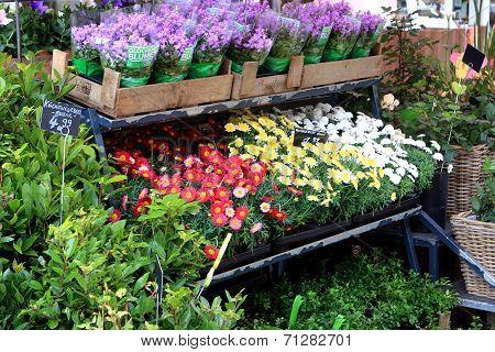 Flower market, Potsdam
