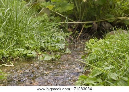 Stream In Forrest