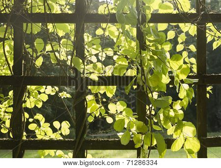 Trellis With Plants