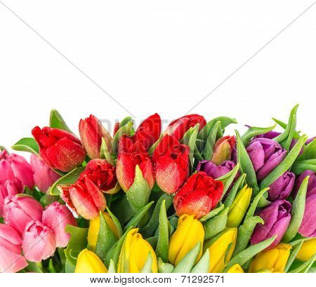 Bouquet Of Fresh Spring Tulips With Water Drops