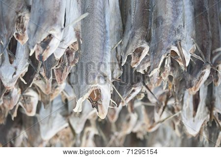 Dried cod stockfish