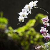 image of orquidea  - Beautiful orchids butterfly orchid , in China