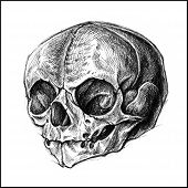 foto of ballpoint  - Skull traditional ballpoint pen drawing - JPG