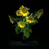 picture of night-blooming  - Sunflower bouquet in black vase at night on a black background - JPG