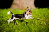 stock photo of yorkie  - small biewer yorkie puppy outdoors in summer - JPG