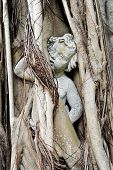 stock photo of cherub  - Cherub Statue Enslaved in Banyan Tree Roots - JPG