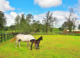 pic of colt  -  The rich country estate - JPG