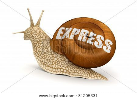 Express Snail (clipping path included)