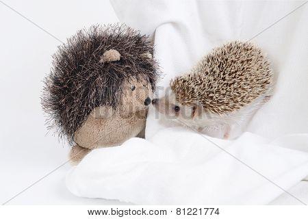Hedgehog And Hedgehog Doll.