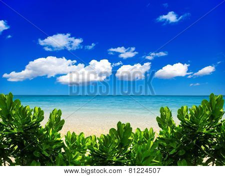 beach and tropical sea, soft focus
