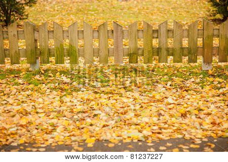 Small wooden fence and  yellow leaves of autumn