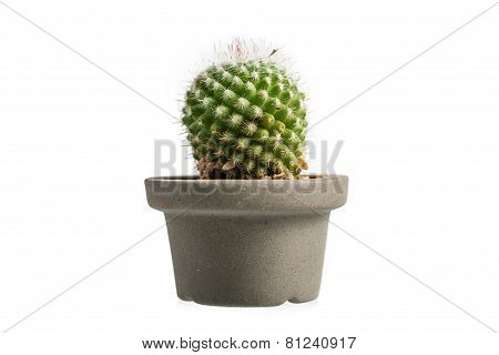 Cactus Isolated On White Background