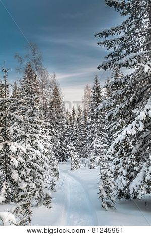 Winter snowy forest under the blue sky