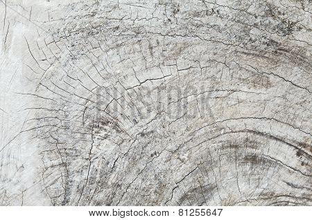 Old teak wood stump background