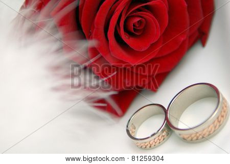 Red Rose With Rings