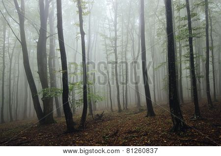 Natural forest with fog after rain