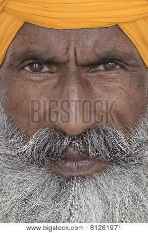 Portrait Of Indian Sikh Man In Turban With Bushy Beard