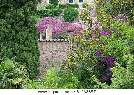 Deia garden in greens and pink and purple bougainvillea flowers