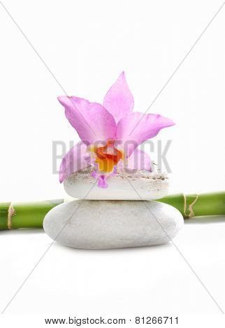 Pink orchid and stone with bamboo grove on white