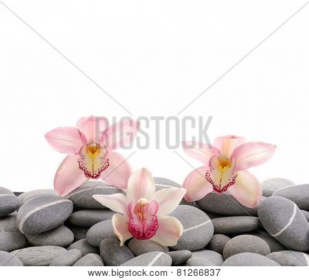 Three orchid on gray pebbles