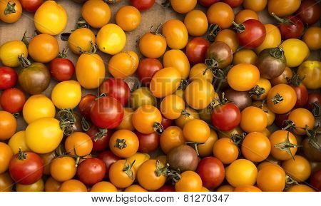 Organic Cherry Tomatoes At Harvest