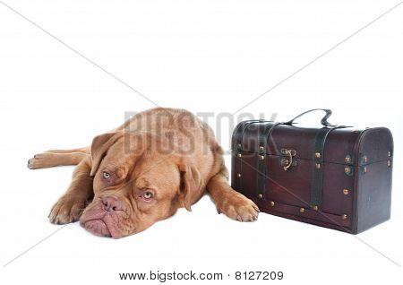 Dog On A Trip