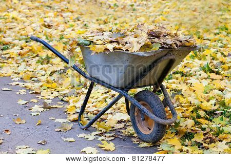 Collected Autumn Leaves On A Green Wheelbarrow
