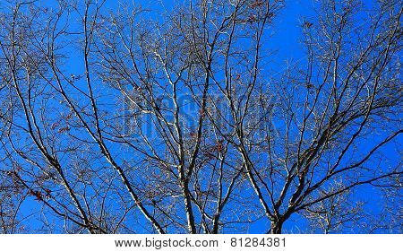 Blue Sky Branch background