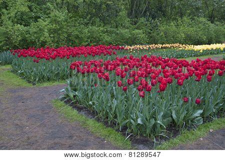 Keukenhof flowers.