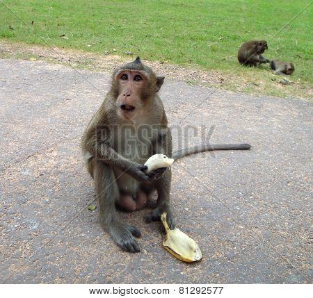 Monkey In Laos