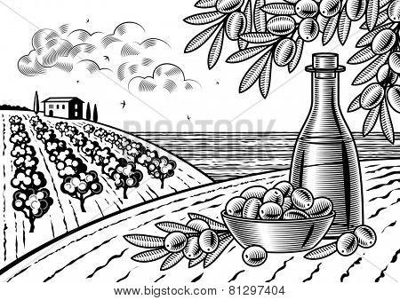 Olive harvest landscape black and white