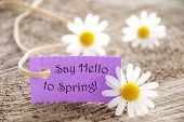 stock photo of saying  - Purpel Label With White Ribbon And English Life Quote Say Hello To Spring With Three White Marguerite Blossoms On Wooden Background