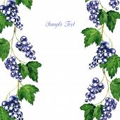 foto of bine  - vector floral frame with branches of black currants drawing by watercolor - JPG