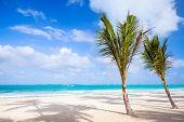 foto of atlantic ocean beach  - Two palm trees grow on empty sandy beach - JPG