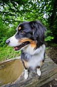 picture of hollow log  - A young dog  - JPG