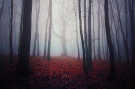 foto of scary haunted  - Scary haunted forest with thick mysterious fog - JPG