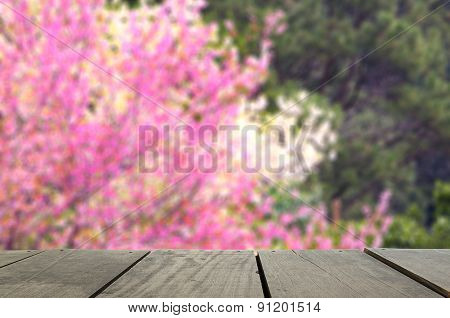 Spring Cheery Blossom On Green Background