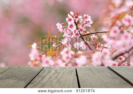 Spring Cheery Blossom