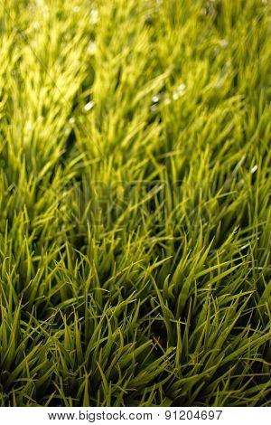Artificial Grass In Close Up