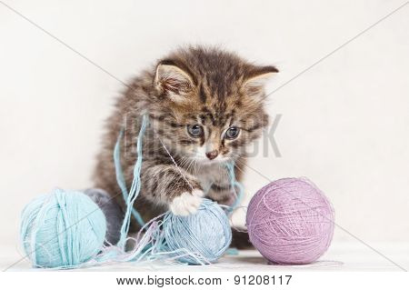 Pretty Kitten Playing With Yarn Ball