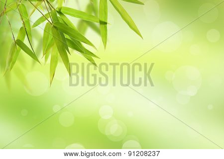 bamboo leaf and abstract green background bokeh